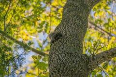 Squirrel. Stock Images