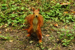 Squirrel in the autumn park. Stock Image