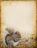 Squirrel Background Stock Photos