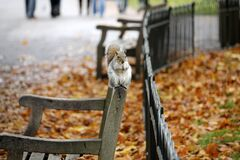 Squirrel on bench in Autumn Stock Photo