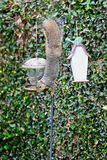 Squirrel bird feeder Royalty Free Stock Images