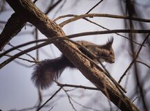 Squirrel on branch Stock Photos