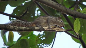 Squirrel on a branch. Stock Photo