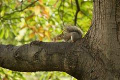 Squirrel on a branch stock photos