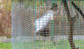 Squirrel in cage Stock Photo