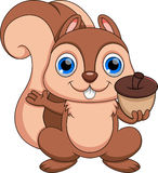Squirrel cartoon Royalty Free Stock Image