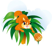 Squirrel cartoon vector illustration Stock Image