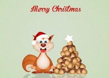 Squirrel at Christmas Stock Photos