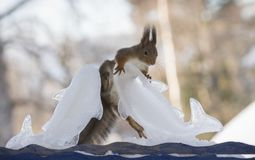 Squirrel is climbing a ice fish Stock Photography