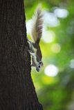 Squirrel climbing on tree plant Royalty Free Stock Photo