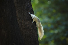 Squirrel climbing on tree plant Stock Image