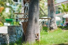 Squirrel climbs a tree from the lawn royalty free stock images