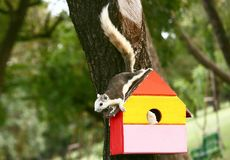 Squirrel on colorful wood house. On the tree, Bird house royalty free stock photography