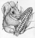 Squirrel with corncob. Funny squirrel with corncob in it's paws Stock Photos