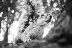 Squirrel. Curious squirrel on a tree Royalty Free Stock Images