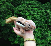 Squirrel doll Royalty Free Stock Images