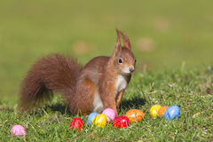 Squirrel with easter eggs. Red squirrel with easter eggs Royalty Free Stock Photo