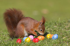 Squirrel with easter eggs. Red squirrel with easter eggs Royalty Free Stock Image