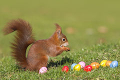 Squirrel with easter eggs royalty free stock photography