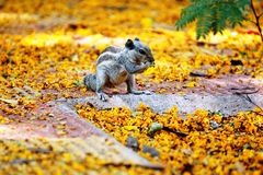 Squirrel eats flower Stock Images