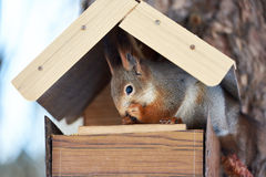 Squirrel eating in the feeder Stock Image