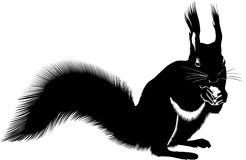 Squirrel eating nut. Black silhouetted illustration of squirrel eating nut, white background royalty free stock photography