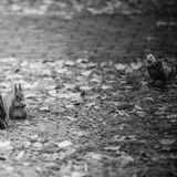 Squirrel eating nut and dove Royalty Free Stock Photo