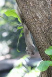 Squirrel. Is eating  a plant Royalty Free Stock Images