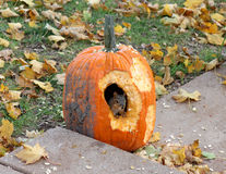 Squirrel eating a pumpkin Stock Photography