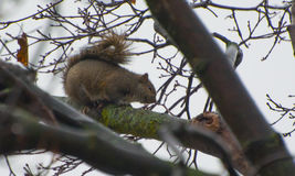 Squirrel. Eating some food outside Stock Images