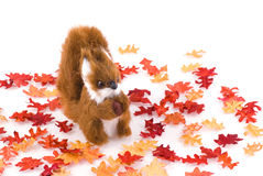Squirrel in fall. Squirrel surrounded by autumn leaves, isolated on white Stock Images