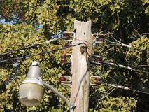 Squirrel Family on Telephone Pole royalty free stock photo