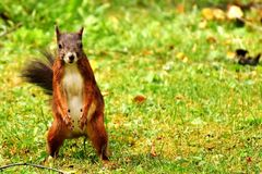 Squirrel, Fauna, Mammal, Wildlife stock photography