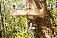 Squirrel and a feeder at the city forest park, feeding wild animals at the city of Moscow Stock Photography