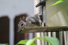 Squirrel feeder Stock Photos