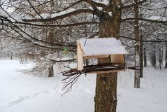 Squirrel feeder in the Park. Squirrel feeder in winter Park, snow-covered trees, Russia, snowdrifts, winter forest Royalty Free Stock Photography