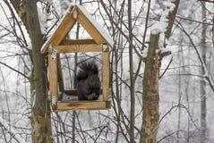 Squirrel in feeder trough stock photo