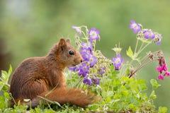 Squirrel flower garden Stock Images