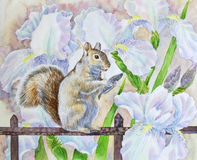 Squirrel and flowers. Stock Photo