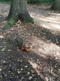 Squirrel in the forest. stock photo