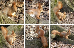 Squirrel in the forest. Stock Photos