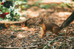 Squirrel in the forest via background with flowers Stock Photos