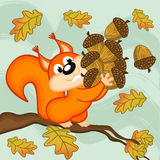 Squirrel gathers acorns Stock Image