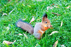 A squirrel Stock Images