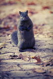 Squirrel. On guard in Toronto's High Park area Stock Image