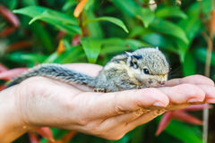 Squirrel on hand Stock Photo