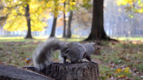 Squirrel and hand Royalty Free Stock Photo