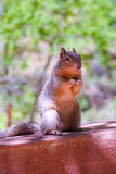 Squirrel on a hand railing Royalty Free Stock Photography