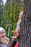 The squirrel has dinner Stock Images