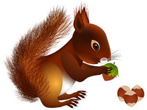 Squirrel with hazelnut. Royalty Free Stock Images